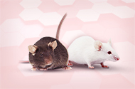 One-Stop Small Animal Phenotype Analysis Platform