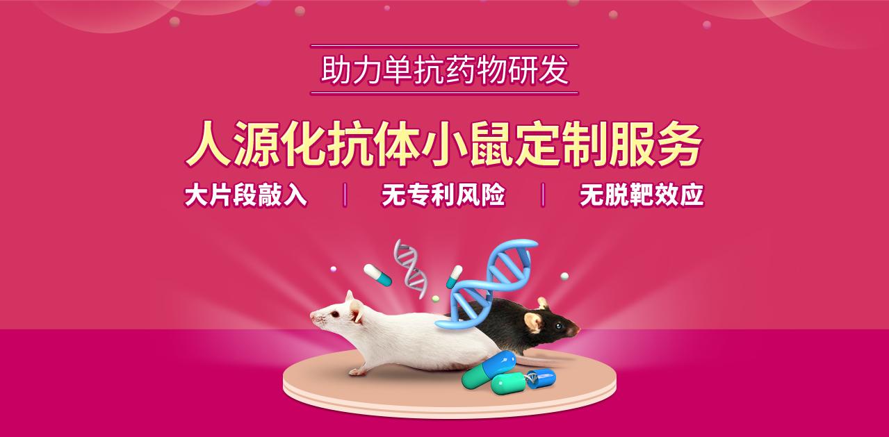 人源化抗体小鼠定制服务 助力单抗药物研发 大片段敲入 无专利风险 无脱靶效应