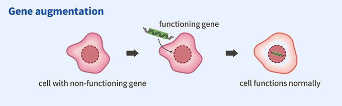 Gene augmentation: cell with non-functioning gene → functioning gene → cell functions normally