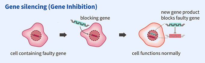 Gene silencing (Gene Inhibition):cell containing faulty gene → blocking gene → cell functions normally (new gene product blocks faulty gene)