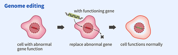 Genome editing: cell with abnormal gene function → replace abnormal gene (with functioning gene) → cell functions normally