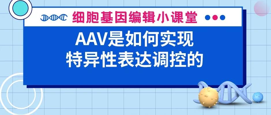AAV是如何实现特异性表达调控的   赛业生物