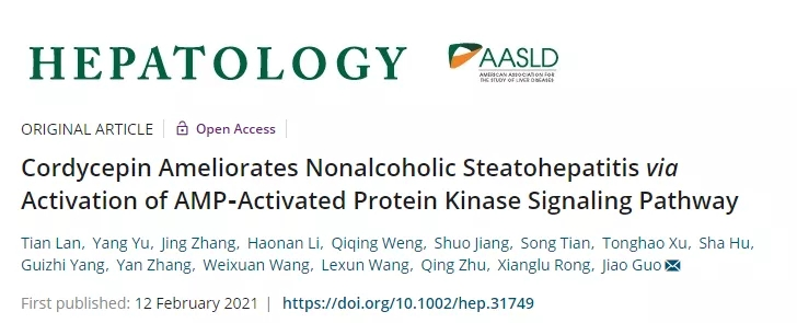 AMPK経路を活性化することにより、コルジセピンが肝臓の脂肪蓄積を抑制し、肝臓の炎症性損傷や線維化の発生を予防できる | Cyagen Japan
