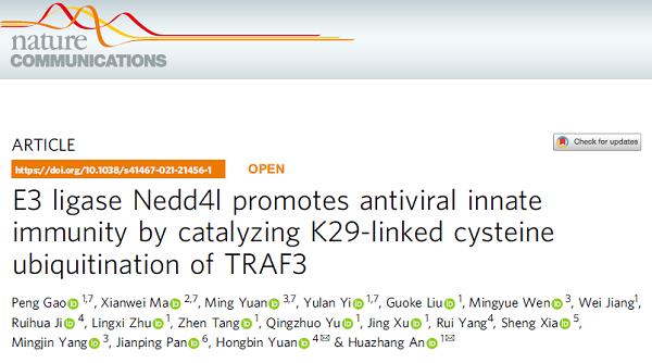 E3连接酶Nedd4l通过催化TRAF3中的K29连接的半胱氨酸泛素化来正向调控抗病毒免疫反应