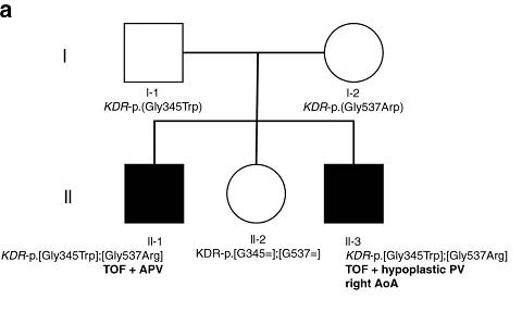 图1. 家族谱系。两个受影响的孩子用黑色符号标记,未受影响的父母和兄弟姐妹用白色符号标记