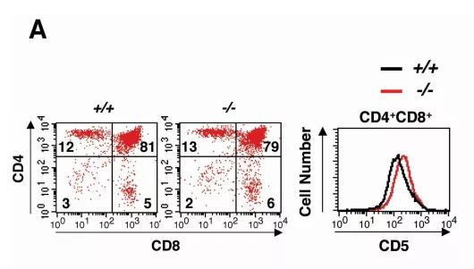 图1. Ptpn22基因敲除小鼠T细胞的发育 | 赛业生物