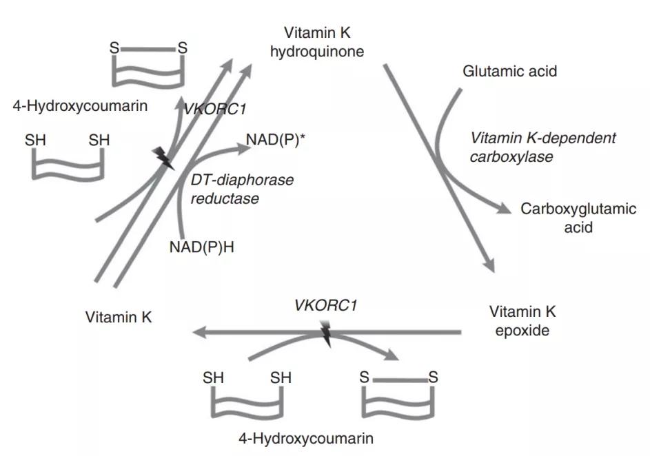 图1. VK循环 | 赛业生物