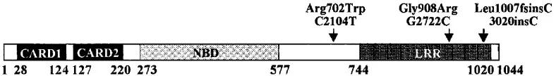 图1. Nod2基因的结构和克罗恩病相关变异体的定位   赛业生物