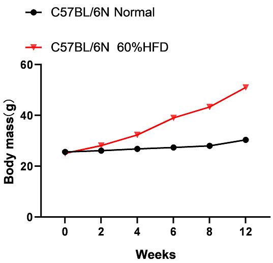 图1. 模型组(60%高脂饲料喂养)和对照组小鼠(普通饲料喂养)体重变化对比