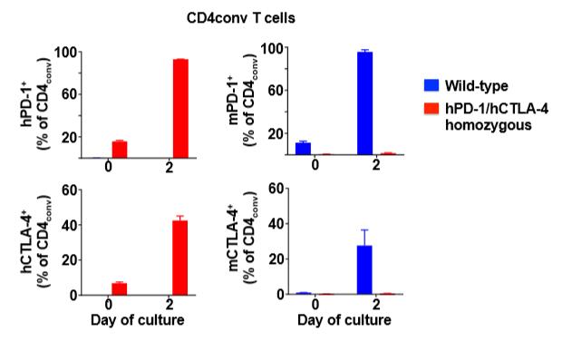 图1. hPD-1和hCTLA-4在hPD-1/hCTLA-4小鼠中的表达模式与mPD-1和mCTLA-4在野生型小鼠中的表达模式一致
