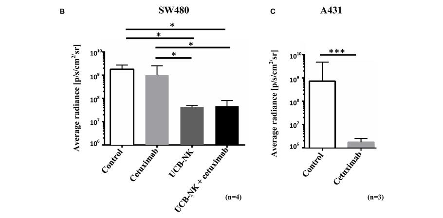 图2. 荧光活体成像结果显示UCB-NK具有显著的抗肿瘤效果 | 赛业生物