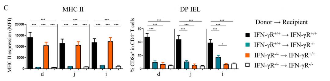 图2C. DP IELs的分化需要完整的IFN-γR信号