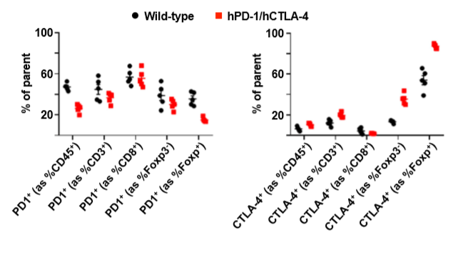 图2. hPD-1和hCTLA-4在肿瘤浸润淋巴细胞(TILs)中的表达情况