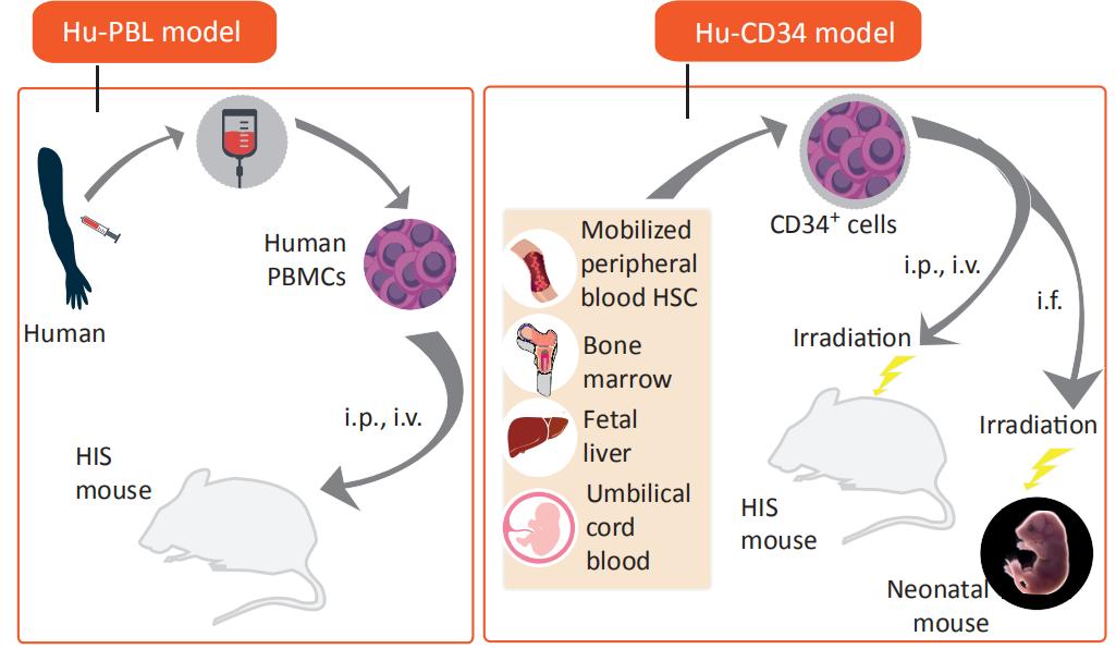 图2. 三种免疫系统人源化小鼠的构建方式