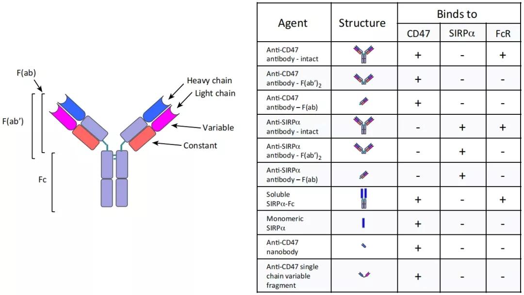 图3. Sirpα-CD47抑制剂