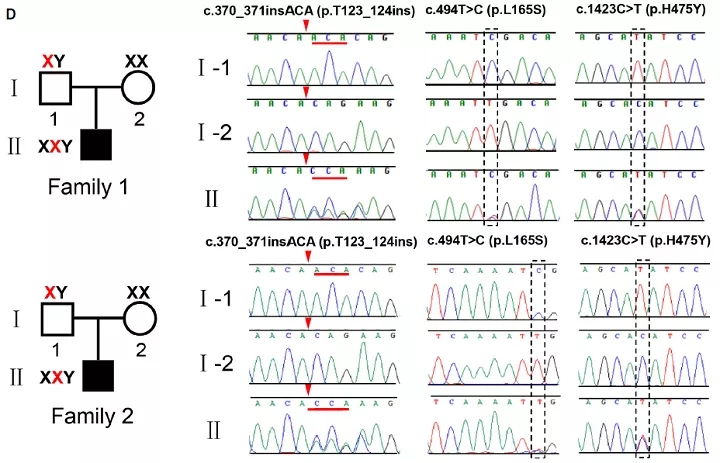 图3. 带有USP26突变的男性产生了XY非整倍体精子   赛业生物