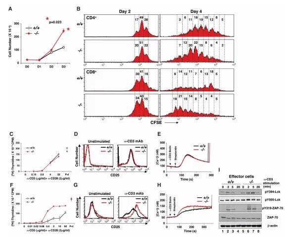 图4. 体外产生效应T细胞TCR介导功能增强 | 赛业生物