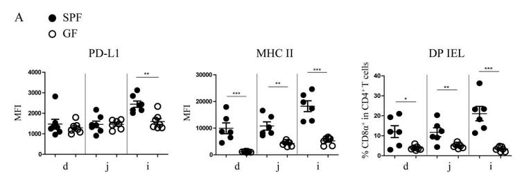 图4A. 与SPF小鼠对比,GF小鼠IECs上PD-L1的表达水平在回肠中显著降低、MHC II表达量和DP IELs比例在小肠各部位显著下降,特别是在回肠中