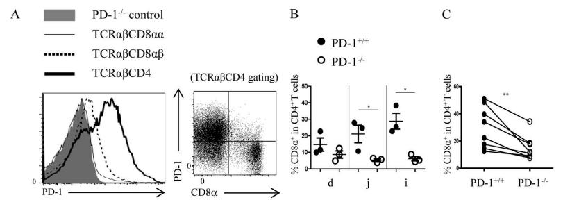 图5A-C. (A)C57BL/6野生型小鼠中,PD-1在不同IEL亚群中的表达情况。当SP IELs向DP IELs分化时,PD-1表达量下降。(B)与PD-L1+/+小鼠对比,在PD-L1−/−小鼠小肠中,DP IELs比例明显下降。(C)将来自于PD-L1+/+小鼠和PD-L1−/−小鼠的脾CD4+ T细胞1:1混合后,移植到RAG-1−/−受体小鼠体内。来源于PD-L1−/−CD4+ T细胞的DP IELs比例明显降低。