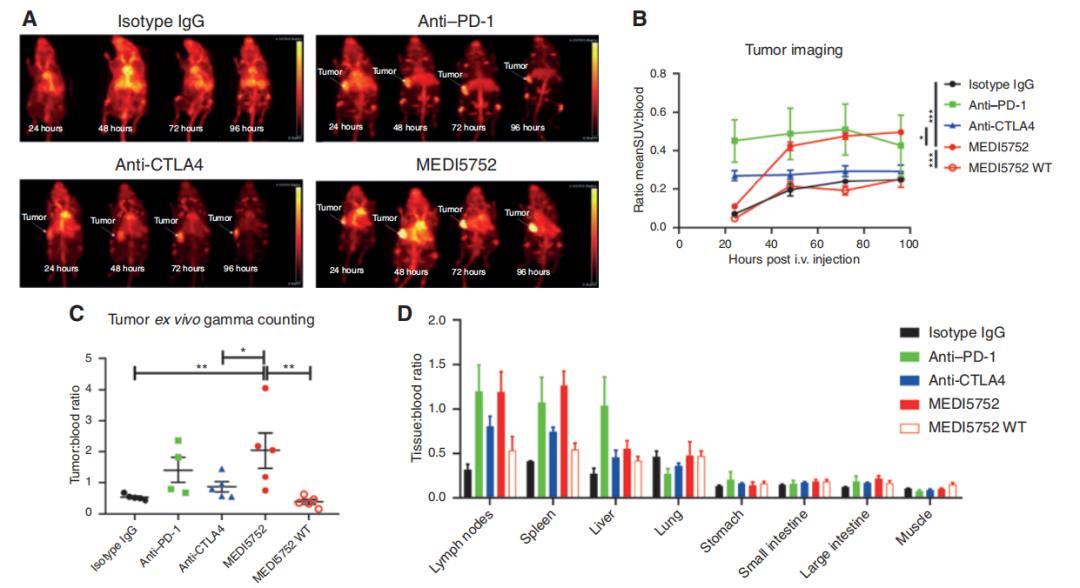 图6. MEDI5752在体内能优先定位于肿瘤部位并抑制肿瘤生长-1