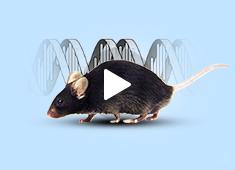 赛业云课堂:环状RNA敲除敲降细胞系及动物模型构建策略及课题解决方案