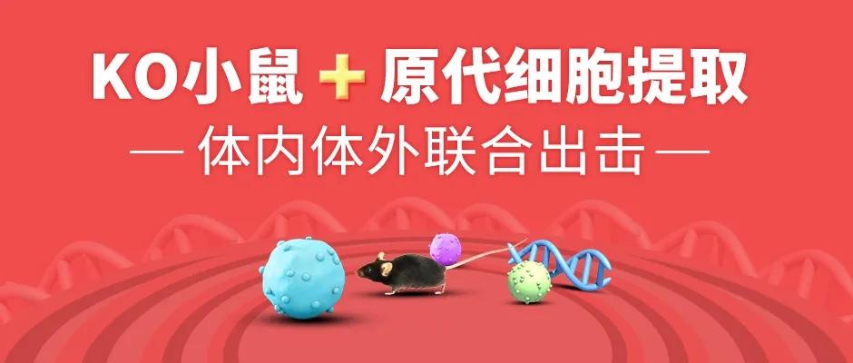 小鼠原代细胞提取服务