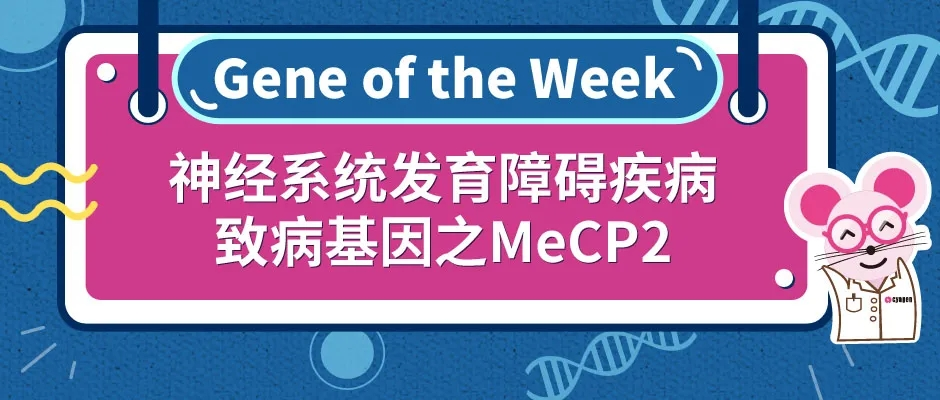 神经系统发育障碍疾病致病基因之MeCP2