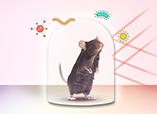 无菌鼠技术服务
