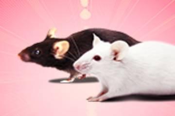 人源化小鼠模型介绍