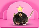明星鼠模型