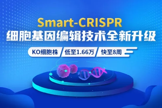 Smart-CRISPR™敲除细胞株全新升级,助您发文更快速