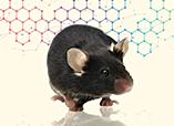 赛业生物Cre大鼠平台