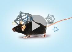 基因编辑小鼠模型构建原理与技术方法