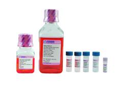 肝细胞完全培养基