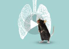 肺动脉高压及血流动力学测试