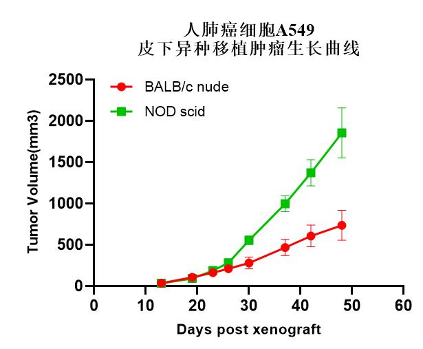 NOD scid 小鼠-表型验证