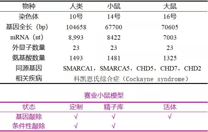 表1. ERCC6的基本信息