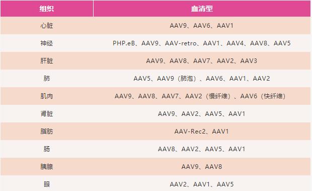 表2. 部分AAV组织特异性血清型   赛业生物