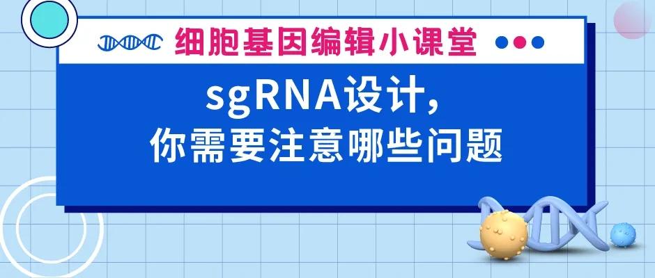 sgRNA设计,你需要注意哪些问题 | 赛业生物