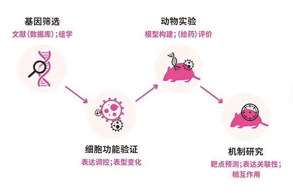 图1. 肿瘤基因功能研究思路