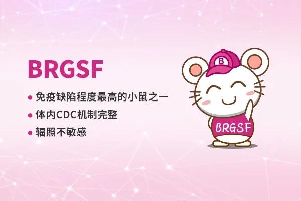 BRGSF重度免疫缺陷小鼠