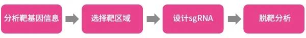 图1. sgRNA的设计流程 | 赛业生物