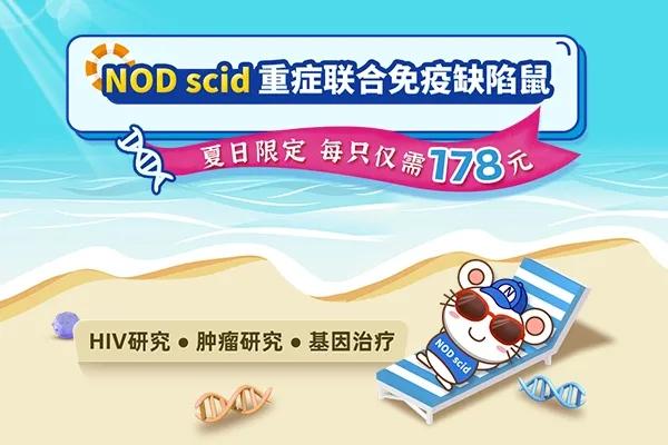 NOD scid免疫缺陷小鼠爆款直降,每只仅需178元