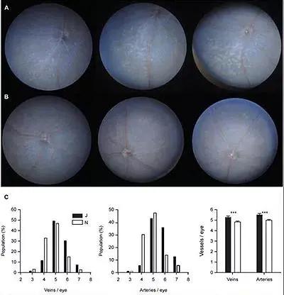C57BL/6J小鼠容易发生小眼畸形及其它相关的眼疾病