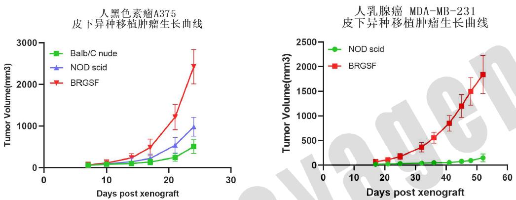图1. 人黑色素瘤A375细胞、人乳腺癌MDA-MB-231细胞皮下成瘤实验