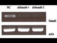 PCR类检测