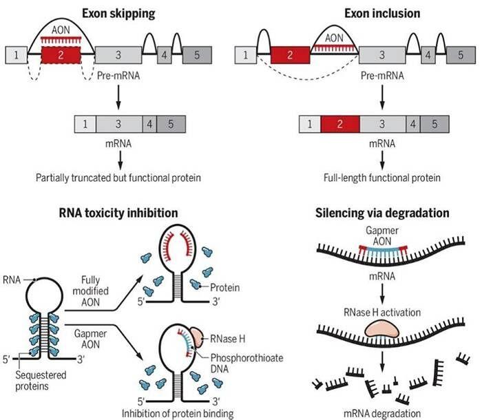 Antisense oligonucleotide therapies