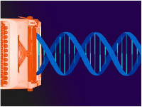 CRISPR专利大战有望硝烟再起!加州大学伯克利分校等在欧洲获CRISPR/Cas9专利权