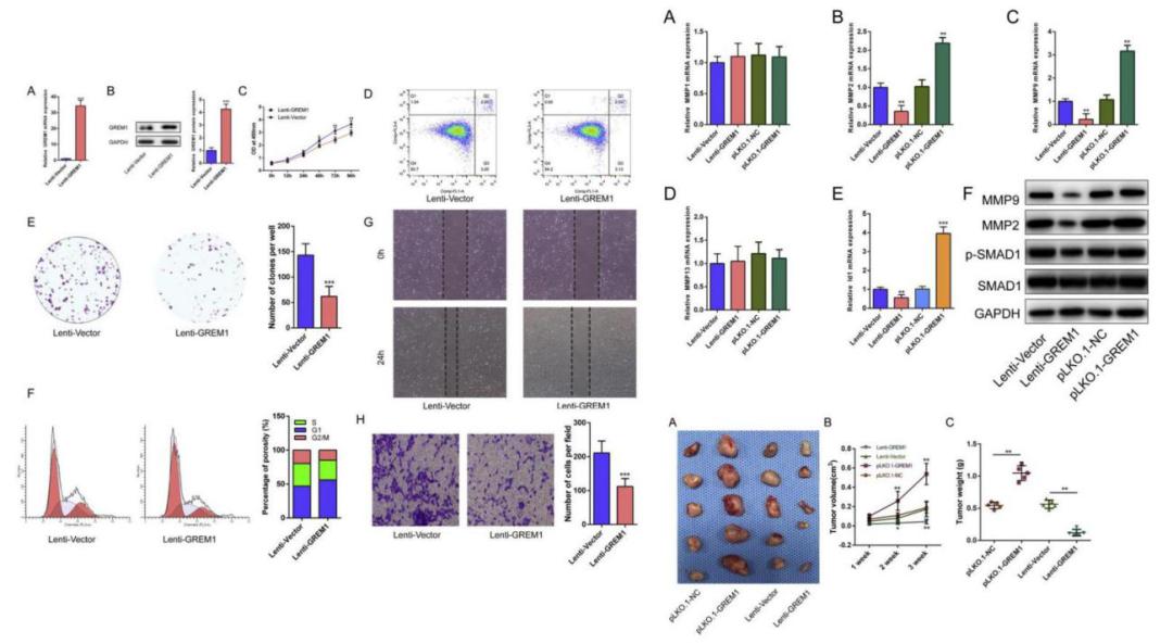 图3. GREM1基因在骨肉瘤中的相关功能