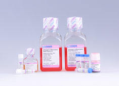 脐血间充质干细胞成脂诱导分化培养基